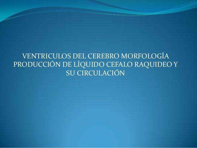 VENTRICULOS DEL CEREBRO MORFOLOGÍA PRODUCCIÓN DE LÍQUIDO CEFALO RAQUIDEO Y SU CIRCULACIÓN