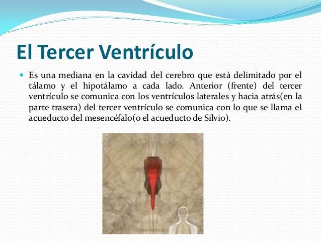 Ventriculos del cerebro morfología producción de líquido cefalo raqui…