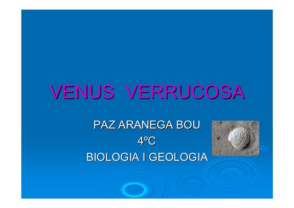 VENUS VERRUCOSA    PAZ ARANEGA BOU           4ºC   BIOLOGIA I GEOLOGIA