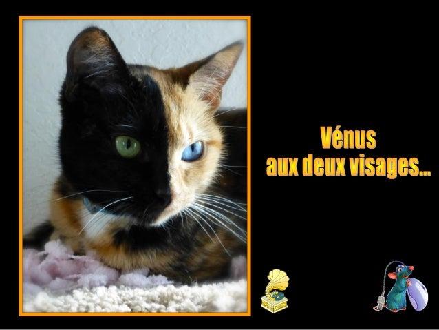 Cette jolie petite chatte possède deux visages avec une symétrie parfaite au niveau de la tête. D'un côté noir et de l'aut...