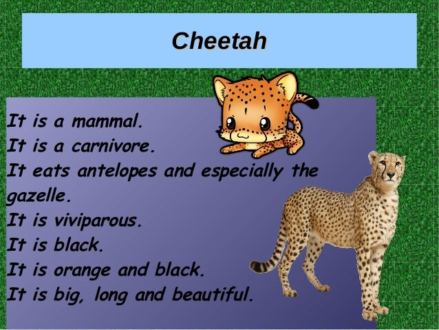 CheetahCheetah It is a mammal. It is a carnivore. It eats antelopes and especially the gazelle. It is viviparous. It is bl...