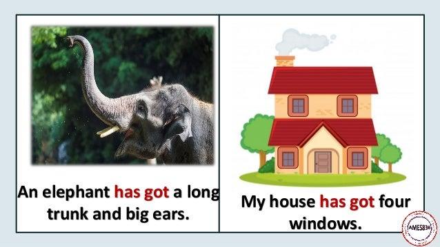 An elephant has got a long trunk and big ears. My house has got four windows.