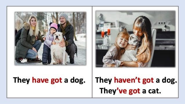 They have got a dog. They haven't got a dog. They've got a cat.