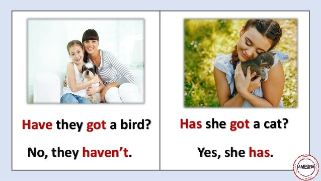 Have they got a bird? No, they haven't. Has she got a cat? Yes, she has.