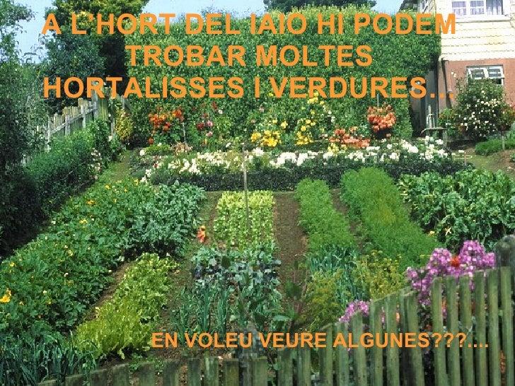 A L'HORT DEL IAIO HI PODEM TROBAR MOLTES HORTALISSES I VERDURES… EN VOLEU VEURE ALGUNES???....