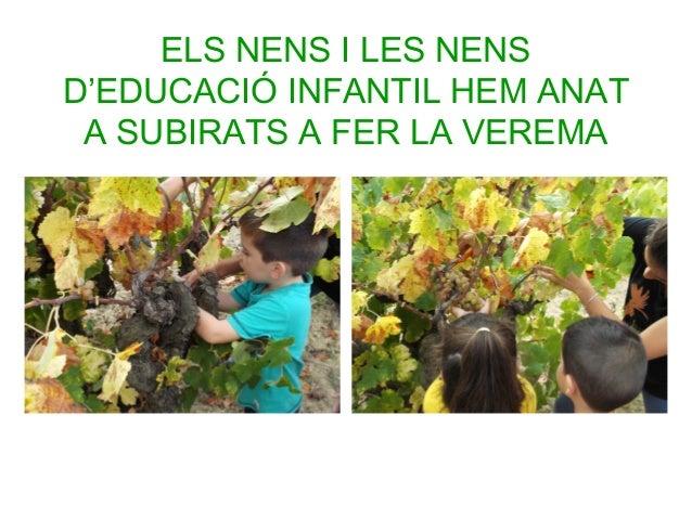 ELS NENS I LES NENS D'EDUCACIÓ INFANTIL HEM ANAT A SUBIRATS A FER LA VEREMA
