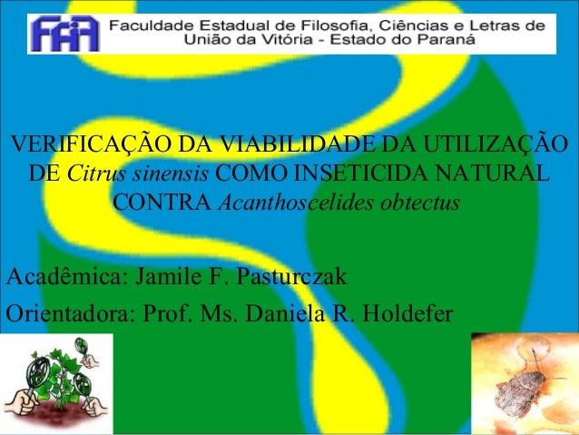 VERIFICAÇÃO DA VIABILIDADE DA UTILIZAÇÃO DE Citrus sinensis COMO INSETICIDA NATURAL CONTRA Acanthoscelides obtectus Acadêm...