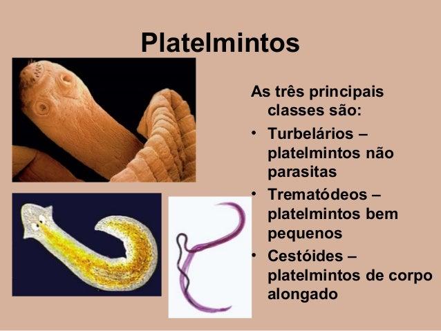 Ajuste um parasita do corpo sólido de engrenagem metálico como usar