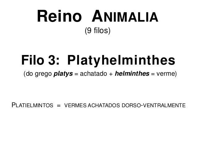 Reino ANIMALIA(9 filos)Filo 3: Platyhelminthes(do grego platys = achatado + helminthes = verme)PLATIELMINTOS = VERMES ACHA...