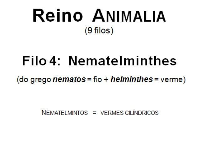 Os nematelmintos(2 espécies)ESPÉCIE Ascaris lumbricoides Ancylostoma duodenaleDOENÇA Ascaridíase Ancilostomose (amarelão)C...