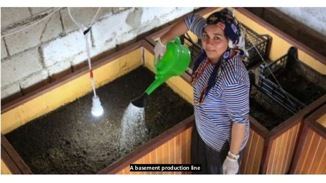 Small-scale Vermicompost production facility at a state school, for educational purposes and for selling