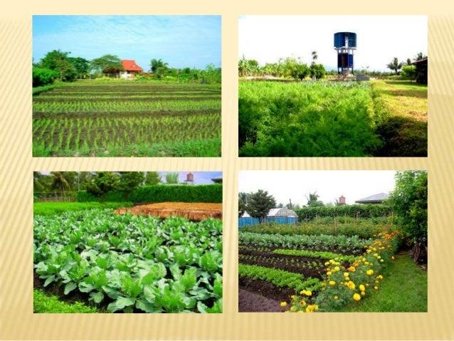 Vermi presentation for Sa landscaping