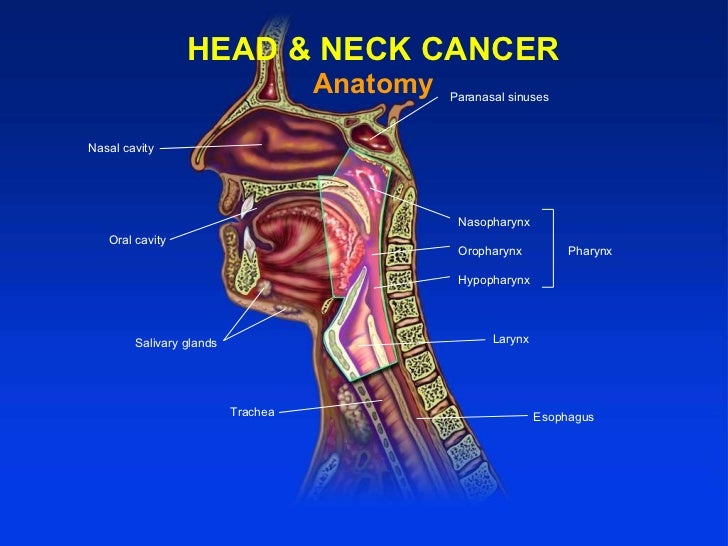 End stage head and neck cancer - Maple suyrup diet