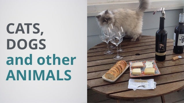 CATS, DOGS and other ANIMALS