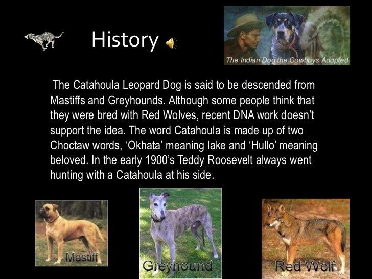 Catahoula Leopard Dog Report