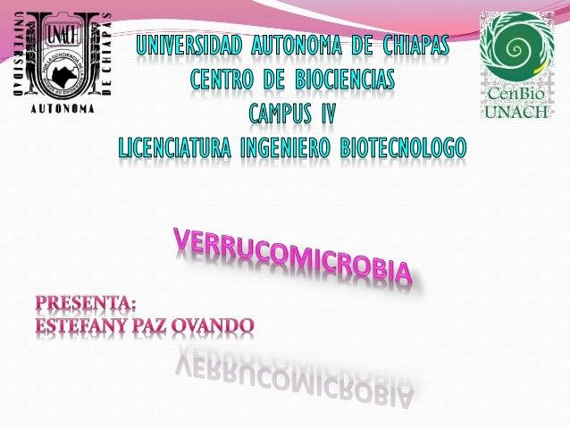Verrucomicrobia Clasificación científica Dominio: Bacteria Filo: Verrucomicrobia Orden: Verrucomicrobiales Familia: Verruc...