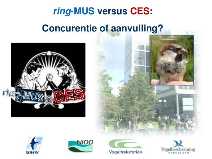 ring-MUS versus CES:Concurentie of aanvulling?