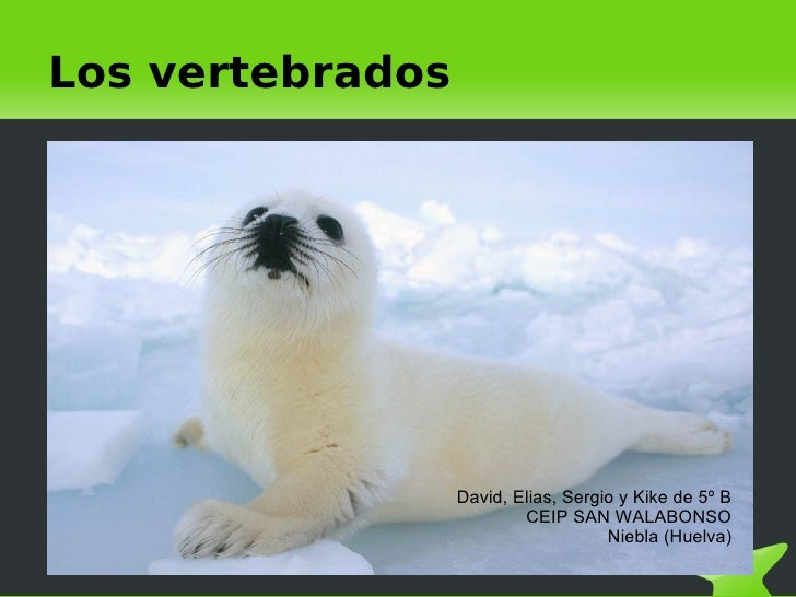 Los vertebrados                           David, Elias, Sergio y Kike de 5º B                               CEIP SAN WALAB...