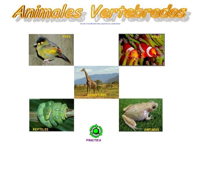 REPTILES Haz clic en las diferentes fotos y aprende sus características PECES MAMÍFEROS ANFIBIOS AVES PRACTICA