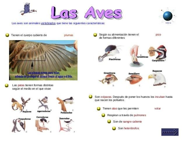 InicioLas aves son animales vertebrados que tiene las siguientes características: Tienen el cuerpo cubierto de plumas Segú...