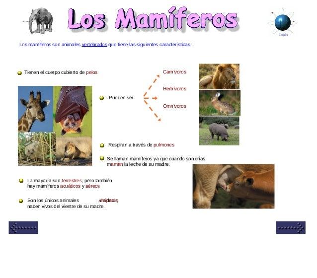 Inicio Los mamíferos son animales vertebrados que tiene las siguientes características: Tienen el cuerpo cubierto de pelos...