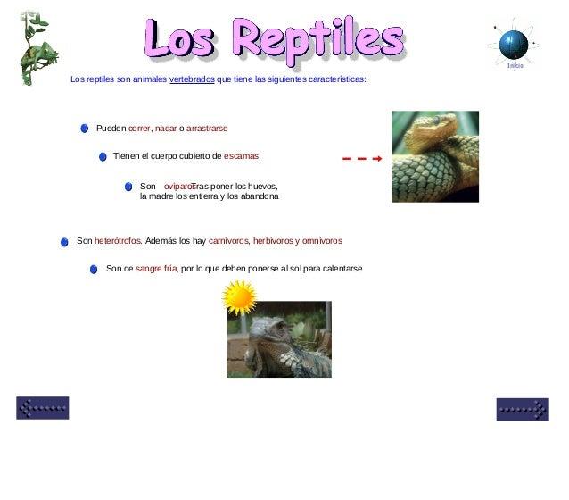 Inicio Los reptiles son animales vertebrados que tiene las siguientes características: Tienen el cuerpo cubierto de escama...