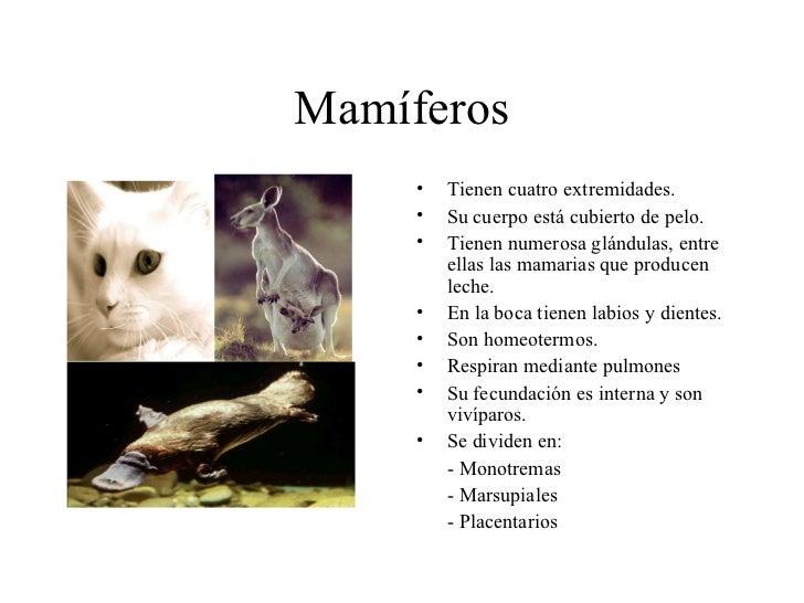 Mamíferos <ul><li>Tienen cuatro extremidades. </li></ul><ul><li>Su cuerpo está cubierto de pelo. </li></ul><ul><li>Tienen ...