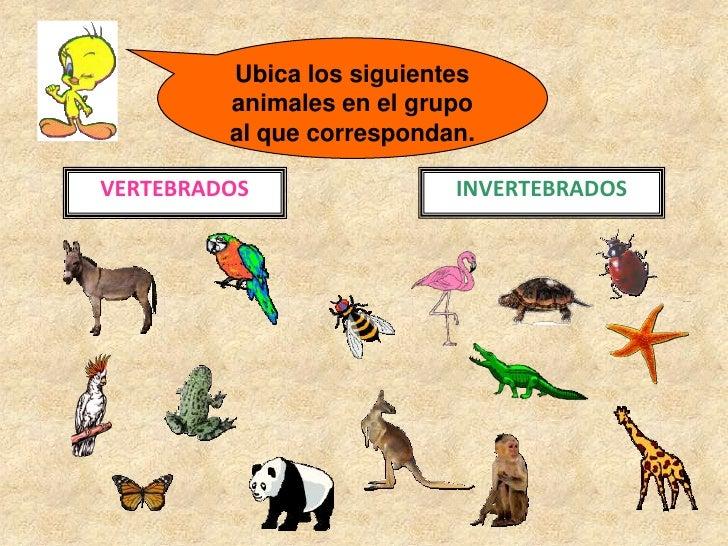 Animales invertebrados: ejemplos y caractersticas - con fotos 1