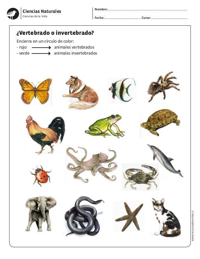 Ciencias Naturales Nombre: Fecha: Curso: www.recursosdocentes.cl Ciencias de la Vida �Vertebrado o invertebrado? Encierra ...