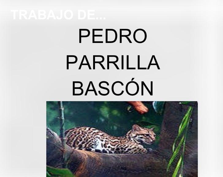 TRABAJO DE... <ul>PEDRO PARRILLA BASCÓN </ul>
