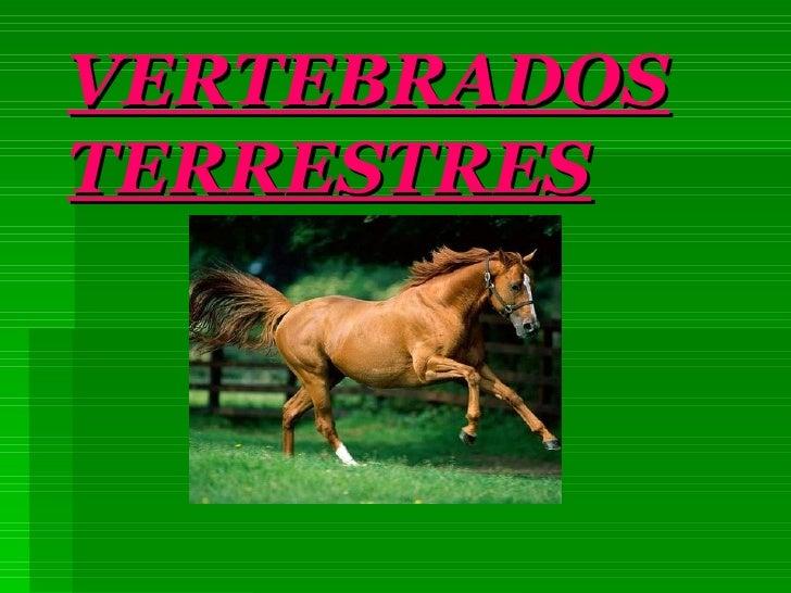 VERTEBRADOS TERRESTRES