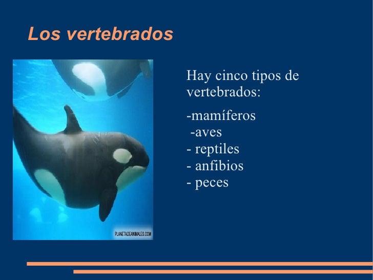 Los vertebrados                    Hay cinco tipos de                   vertebrados:                   -mamíferos         ...