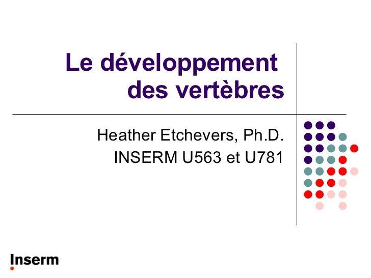 Le développement  des vertèbres Heather Etchevers, Ph.D. INSERM U563 et U781