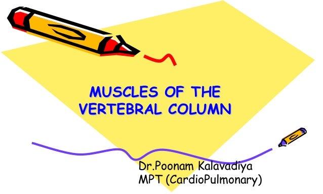 MUSCLES OF THE VERTEBRAL COLUMN Dr.Poonam Kalavadiya MPT (CardioPulmonary)