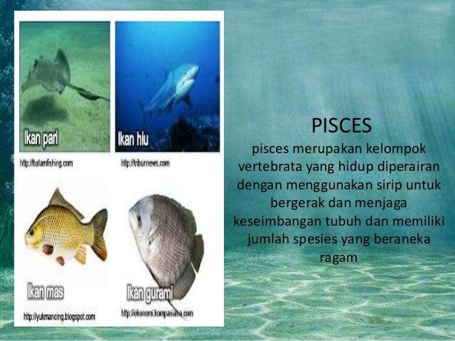 Unduh 56 Gambar Ikan Vertebrata HD Terbaik