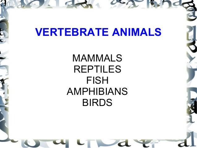 VERTEBRATE ANIMALS MAMMALS REPTILES FISH AMPHIBIANS BIRDS