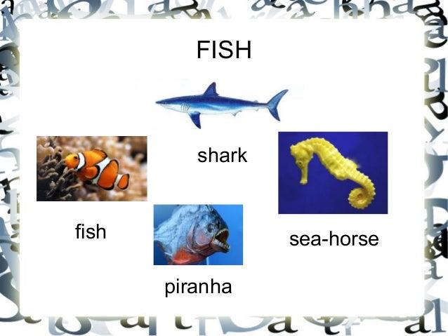 Vertebrate animals for Characteristics of fish