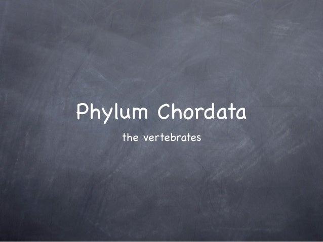 Phylum Chordata   the vertebrates