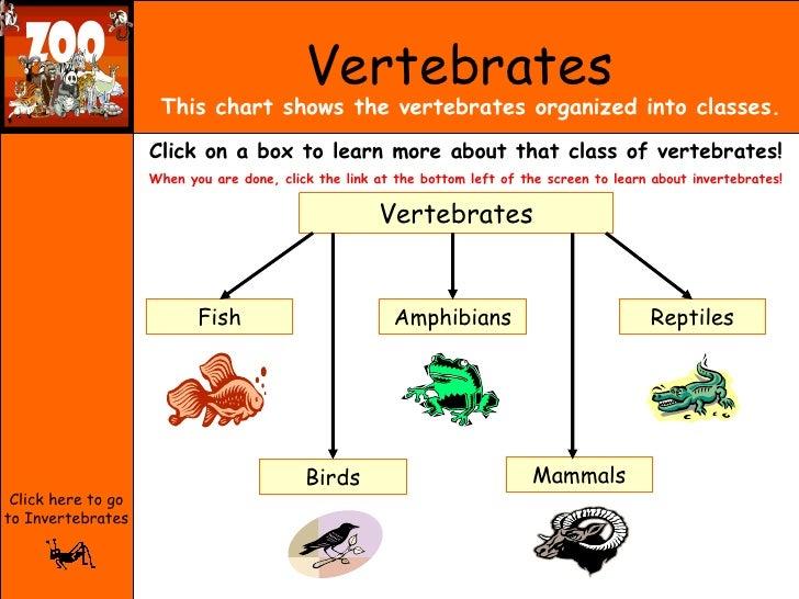 Vertebrates and Invertebrates