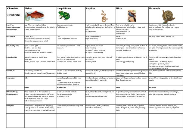 """a study of the taxonomy of frogs Oung naturalists minnesota conservation volunteer teachers guide for the young naturalists article """"chirp, croak, and snore"""" by mary hoff published in the march–april 2014 minnesota conservation volunteer, or visit."""