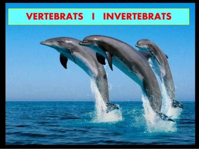 VERTEBRATS I INVERTEBRATS