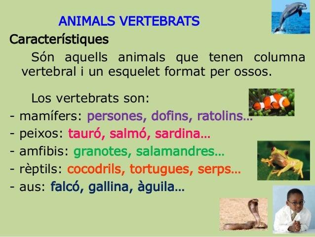 ANIMALS VERTEBRATS Característiques Són aquells animals que tenen columna vertebral i un esquelet format per ossos. Los ve...