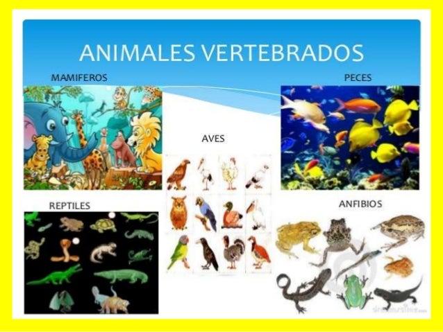 ANIMALES INVERTEBRADOS Característiques Són aquells animals que no tenen columna vertebral ni un esquelet format per ossos...