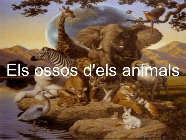 Els   ossos  d'els  animals Els ossos d'els animals