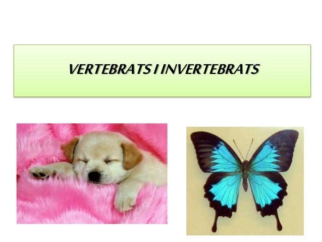 VERTEBRATSIINVERTEBRATS