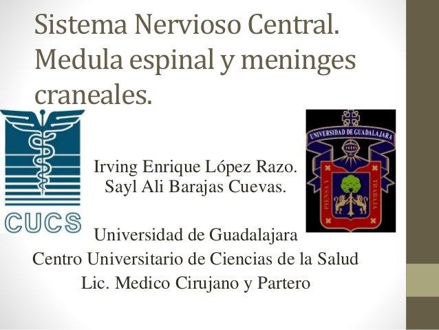 Sistema Nervioso Central. Medula espinal y meninges craneales. Irving Enrique López Razo. Sayl Ali Barajas Cuevas. Univers...