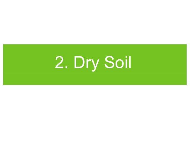Vertical Gardening Problems Solved