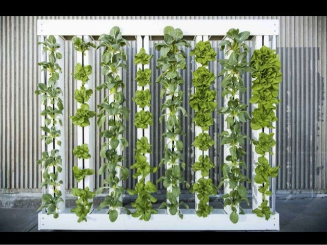 Redesigning Hydroponic Production For Vertical Farming