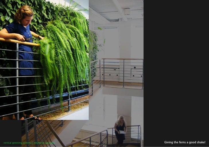 vertical greening systems   stephanie gautama   Giving the ferns a good shake!