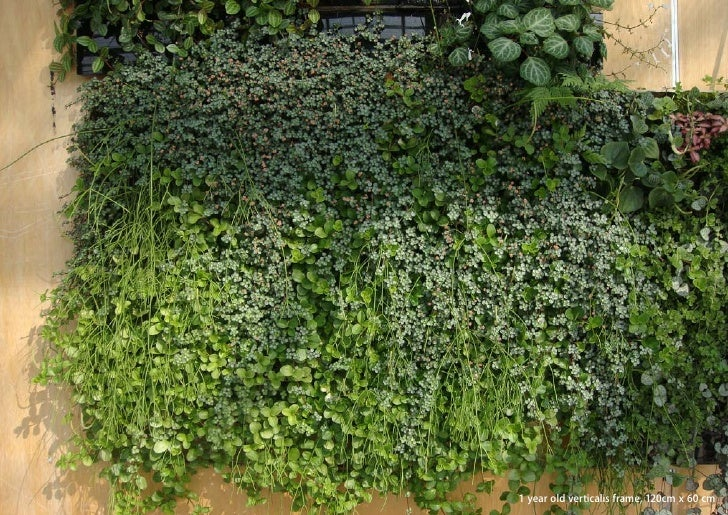 vertical greening systems   stephanie gautama   1 year old verticalis frame, 120cm x 60 cm